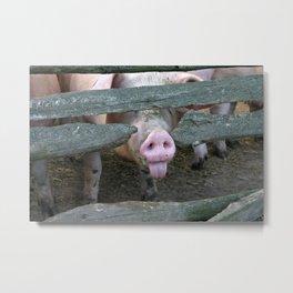 Naughty Pig | Freches Schwein Metal Print