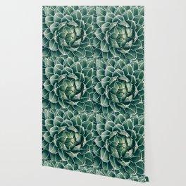 Succulent bloom II Wallpaper