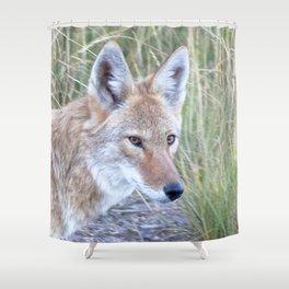 Watercolor Coyote 11, Wile e? Shower Curtain