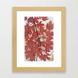 Flame maple Framed Art Print