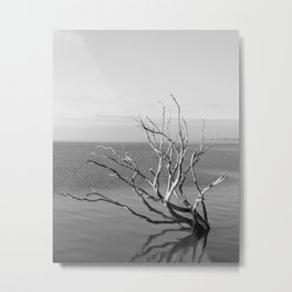 Driftwood Black and White Metal Print