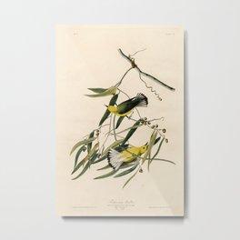 Prothonotary Warbler, Birds of America by John James Audubon Metal Print