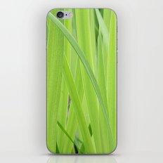 Mystic Green iPhone & iPod Skin