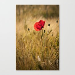 Poppies in a summerfield - Flowers Floral Canvas Print