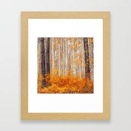 Golden Autumn Forest (Color) Framed Art Print