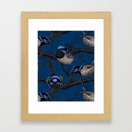 Night fairy wrens Framed Art Print
