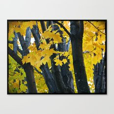 gold and black forest Canvas Print