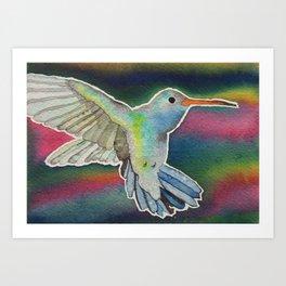 Iridescent Hummingbird  Art Print
