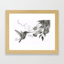 Swordbill Hummingbird Framed Art Print