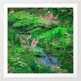 Astilbe by the Brooke Art Print
