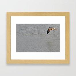 The Birds of Cutler Bay Wetlands (Amazing Grace!) Framed Art Print