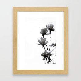 BLACK MAGNOLIA Framed Art Print