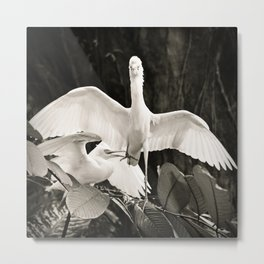 White bird dance 2 Metal Print