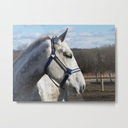 Dapple Gray Metal Print
