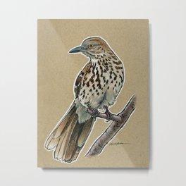 State Bird Series: Georgia - Brown Thrasher Metal Print