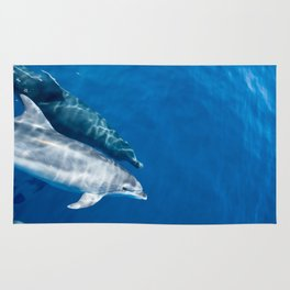 Common Dolphin Rug