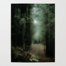 In the forest of Washington state, ponderosa pine trees Poster
