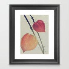 Autumn Botanical, Chinese Lantern - Physalis alkekengi Framed Art Print