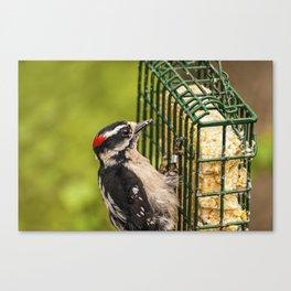 Woodpecker - Bird - Wild Life Canvas Print