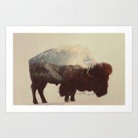 buffalo Art Prints featuring Buffalo by Andreas Lie