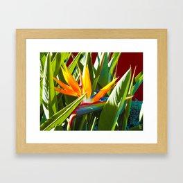 Bird of Paradise III Framed Art Print