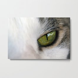 The Eye of the Domesticated Tyger Metal Print