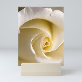 Feminine Rose Mini Art Print