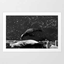 Sea Lions by the Piers Art Print