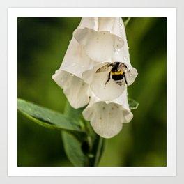 Bumblebee in the campanula Art Print
