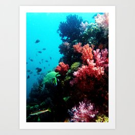 So Corals Art Print