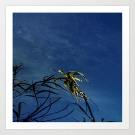 Nature and greenery 14 with reed Art Print