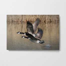 Bird Takeoff Metal Print