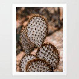 Prickly Pear - Opuntia Chlorotica Art Print