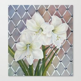 Amaryllis lily Flowers Canvas Print