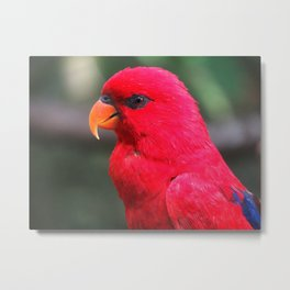 Bird Love Project 04 Metal Print