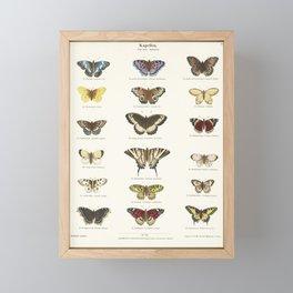 Vintage Butterfly Chart Framed Mini Art Print