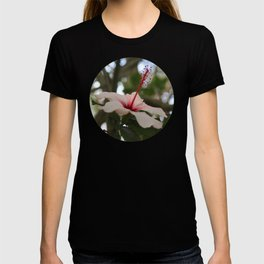 Hibiscus flower on its tree T-shirt
