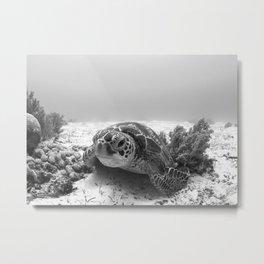Beautiful Turtle in B&W Metal Print