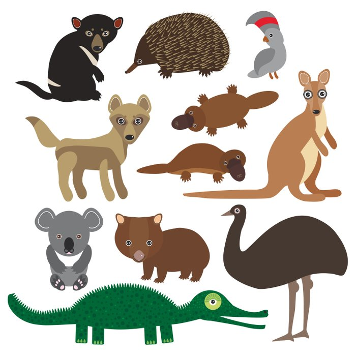 Animals Australia: Echidna Platypus ostrich Emu Tasmanian devil Cockatoo parrot Wombat crocodile Comforters