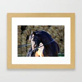 hay bale horse Framed Art Print