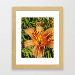 orange dreams Framed Art Print