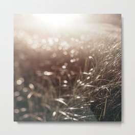 September Beachgrass #2 Metal Print