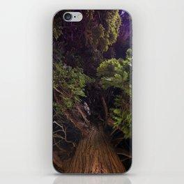 Beautiful Trees / 8 iPhone Skin
