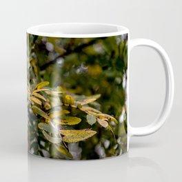 Autumnal leaves on tree Coffee Mug