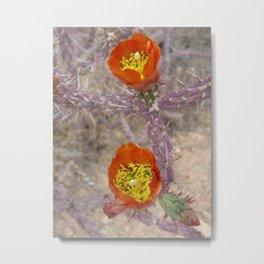 Pencil cholla in flower Metal Print