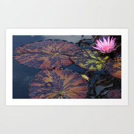 Lily Pads in Summer Art Print