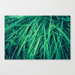 not shaking the grass Canvas Print