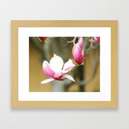 Magnolia Bloom Framed Art Print