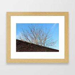Treetop Framed Art Print