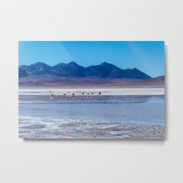 Flamingoes in the Atacama Desert, Bolivia Metal Print